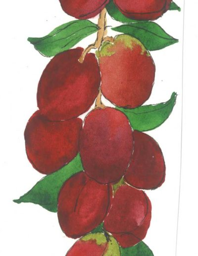 Original illustration of Plums by Jennifer Fraser for Highfield Preserves