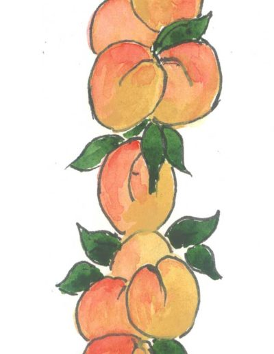 Original Apricot illustration by Jennifer Fraser for Highfield Preserves