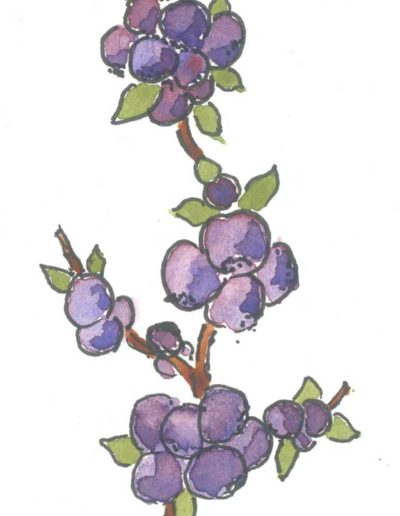 Original Blueberries illustration by Jennifer Fraser for Highfield Preserves