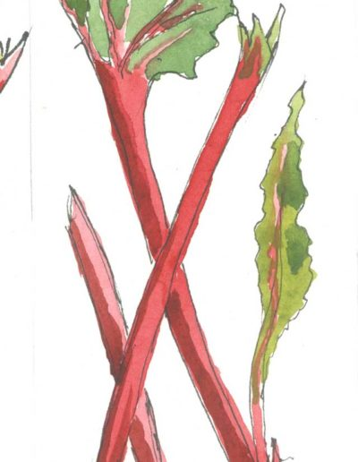 Original Rhubarb and Ginger illustration by Jennifer Fraser for Highfield Preserves