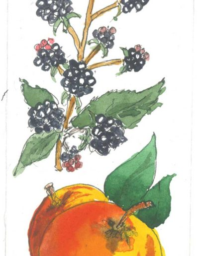 Original Blackberry & Apple illustration by Jennifer Fraser for Highfield Preserves